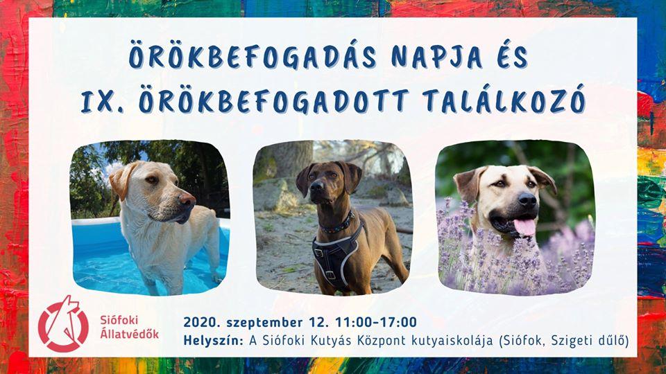 website kutya találkozó)